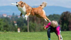Olivia spielt mit Amaro Hundefrisbee